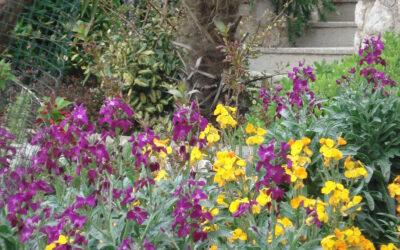 Tradicionalni cvjetni grmovi i cvijeće kostrenskih okućnica