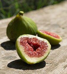 Autohtone vrsta voćaka u Kostreni – smokva