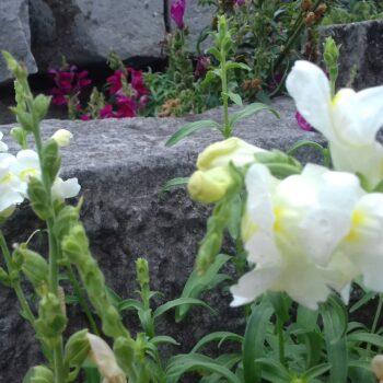 Rujanske vrtne čarolije
